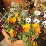 買ったお花を、お店で寄せ植えしてみませんか?